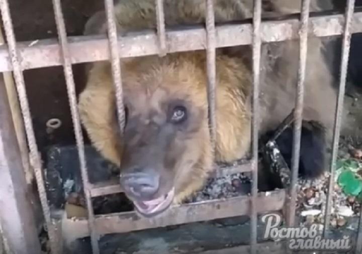 Условия содержания зверей в мини-зоопарке Таганрога проверит прокуратура