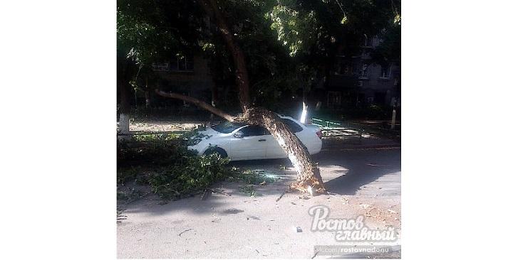 В Ростове на машину упало дерево