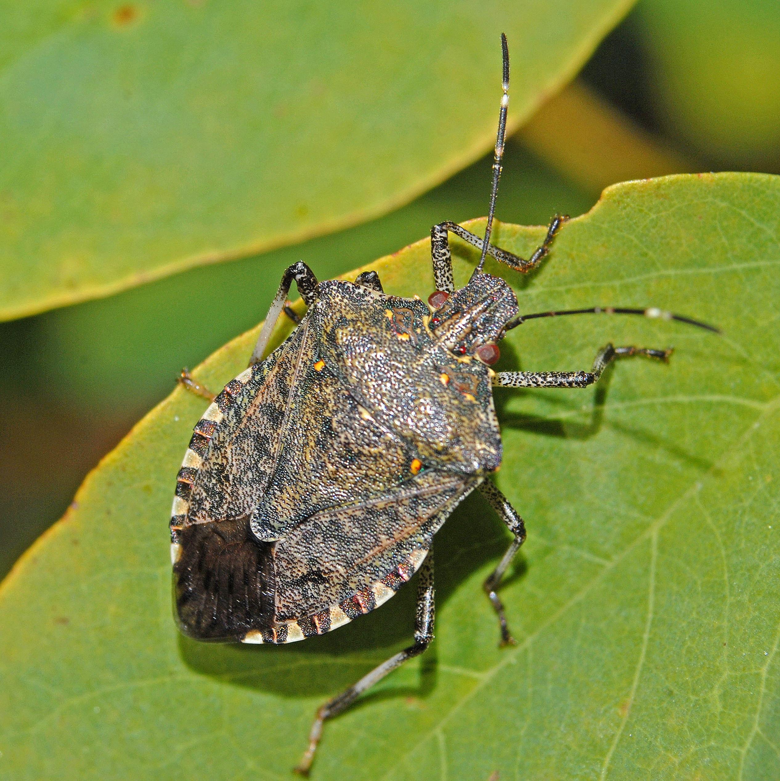 жуки в сочи фото щелкает