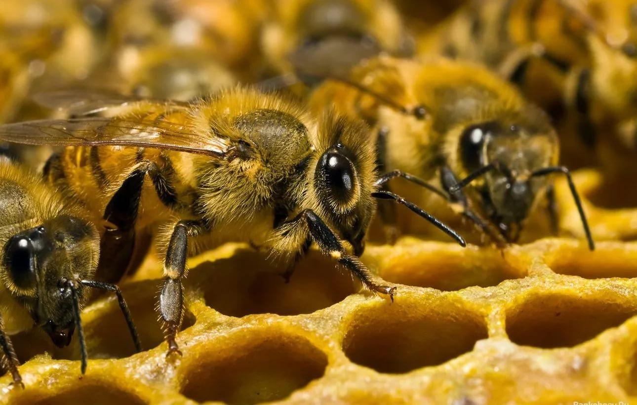 квадратика бумаги картинки пчелы разные игру кем-то диагональных